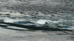 River rapids - telephoto shot Stock Footage