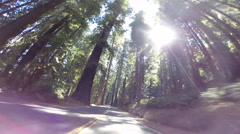 2d avenue of the giants red woods with sun flare Stock Footage