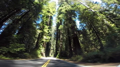 2d avenue of the giants red woods with traffic 2 Stock Footage