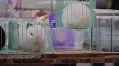 A vendor adjusting the cage of a rabbit on sale at a roadside stall Stock Footage