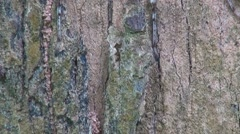Highly Camouflaged Spider Stock Footage