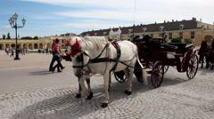 WIEN SCHONBRUNN PALACE COACH HORSES LS CU Stock Footage