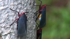 Orange Red and Blue Bugs - stock footage