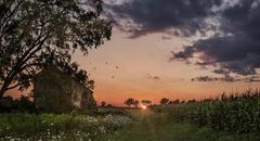 USA, New Jersey, Monmouth, Freehold, Sunset over cornfield Stock Photos