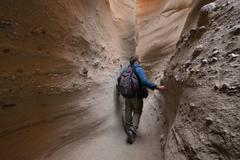 USA, California, Anza-Borrego Desert State Park, Hiker Walking Through Palm Stock Photos