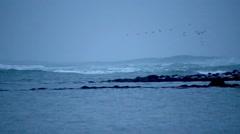 Flock of birds flying over heavy breaking waves surf, Grotta, Reykjavik, Iceland Stock Footage
