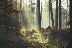 Brugge, Sunbeam lighting a patch of underbrush Stock Photos