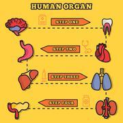 Set flat human organs icons illustration concept. Vector backgro Stock Illustration