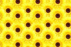artificial sunflower background (helianthus annuus) - stock illustration