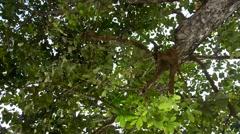 Nature wind and leaf on tree Stock Footage