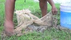 Fisher used fishing net catch catfishes at Phattalung Thailand. Stock Footage