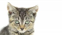 Cute tabby kitten Stock Footage