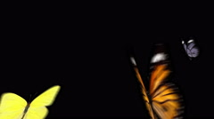 Three Butterflies flying together and flying away Stock Footage