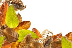 Stock Photo of leaves overlap background