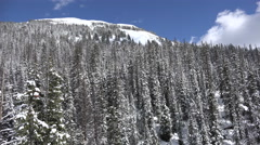 Snow covered trees and blue sky - stock footage