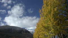 Aspen trees and mountains Stock Footage