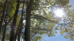 Leaves of an aspen tree and sun Stock Footage