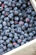 Close up of a box full of freshly picked blueberries. shallow depth of field. Stock Photos