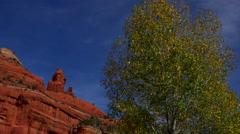 4K Shimmering Oak Red Rock - stock footage
