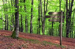 Wooden signpost in beech forest Stock Photos