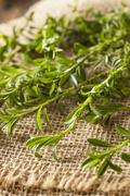 raw organic green savory - stock photo