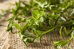 Raw organic green savory Stock Photos