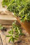 raw organic green savory - stock photo