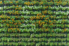 Flower wall vertical garden Stock Photos