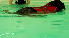Dog is Swimming in Swimming Pool Stock Footage