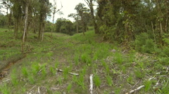 Flying through montane rainforest converted to cattle pasture.  Stock Footage