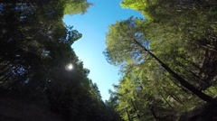 2d red wood forrest looking up Stock Footage