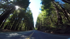 2d driving down avenue of the giants 3 Stock Footage
