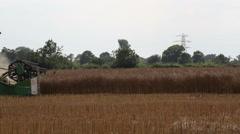 Rapeseed Harvesting - stock footage