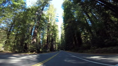 2d driving down avenue of the giants 2 Stock Footage