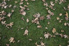 leafy lawn - stock photo
