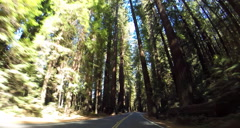 2d driving down avenue of the giants Stock Footage