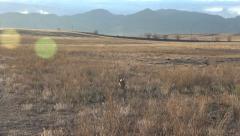 Dog Running Through Field Towards Camera Stock Footage