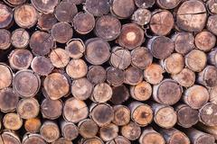 wood log texture background - stock photo
