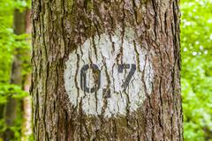 pattern of trees in forest with distance marker - stock photo
