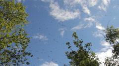 Alaskan Mosquito Swarm Stock Footage