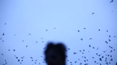 Group of Pigeons in the sky Stock Footage