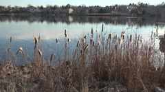 Cattails Over Lake In High Vantage Point Stock Footage
