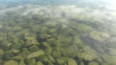 Algae Covered River Rocks Stock Footage