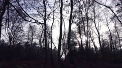 Winter forest trees early morning Stock Footage