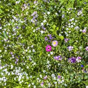 Abstract summer, natural, flower light background. nature bokeh. advertisemen Stock Photos