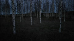 Spooky drone tracking shot birch trees after sunset Stock Footage