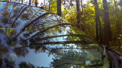 Driving a car, in a forest, camera aimed at the driver through the windshield. Stock Footage