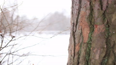 Winter landscape Bark of  tree and branch. 4K ( 4096x2304). Motorized slider   s Stock Footage