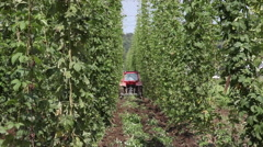 Tractor with plow on the hop field, weeding, wires, plants, farm, bier Stock Footage