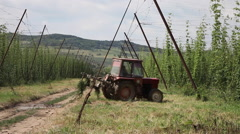 Tractor with plow on the hop field, weeding, wires, plants, agriculture, bier Stock Footage